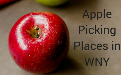 Apple Picking Places in WNY