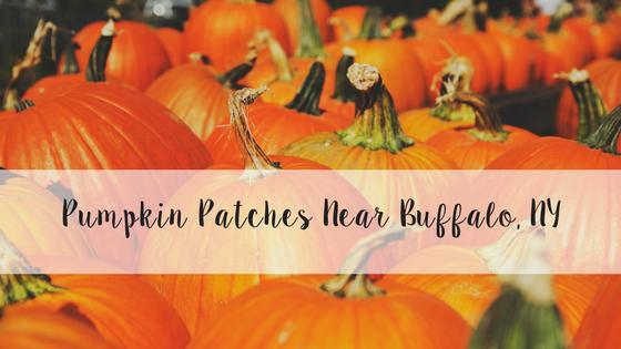 Pumpkin Patches Near Buffalo, NY